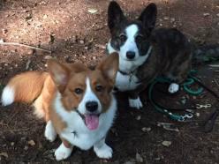 Bogie (left) with his Aunt Winnie