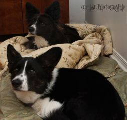 Penny (front, Tori x Boomer) with her Aunt Daisy