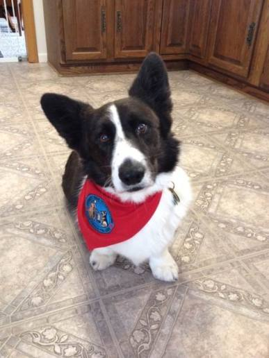 Boomer, new Therapy Dog