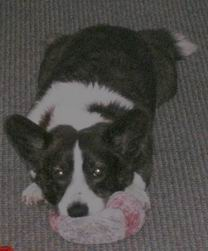 Zorro loves his pink toys